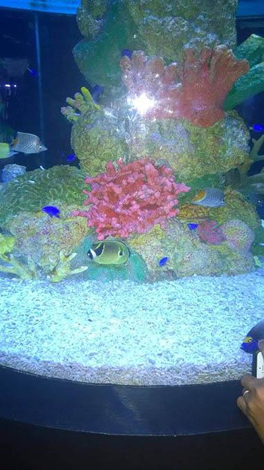 マニラオーシャンパーク魚