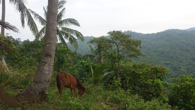 フィリピンの馬